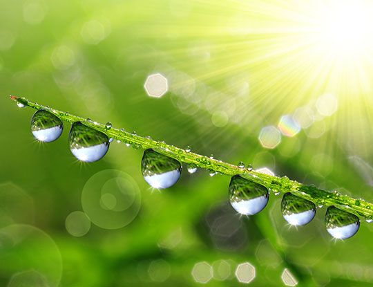 green grass with droplets